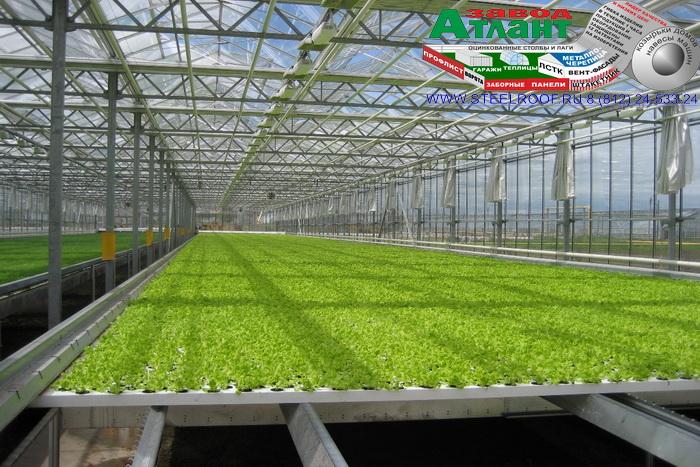 Профессиональные теплицы для выращивания 129
